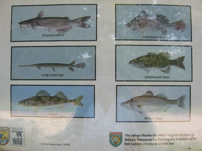 the fish that can be caught.