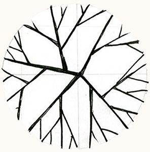Elements: canopy tree