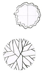 Elements: subcanopy trees