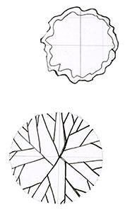 Elements: subcanopy trees