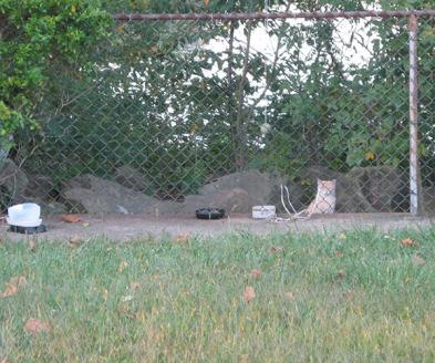 feral cat feeding space