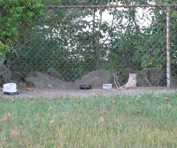 feral cat feeding space