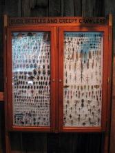 bugs, beetles and creepy crawlers